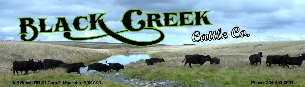 blackcreekangus.com ~ Black Creek Cattle Co.