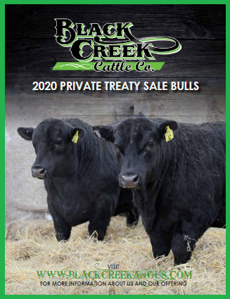 Black Creek Angus 2020 Sale Catalogue