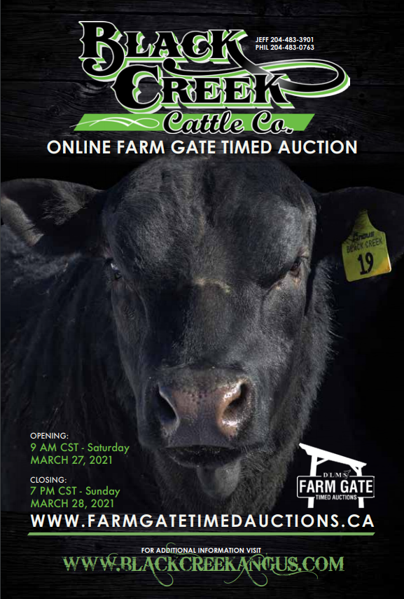 Black Creek Angus 2021 Sale Catalogue